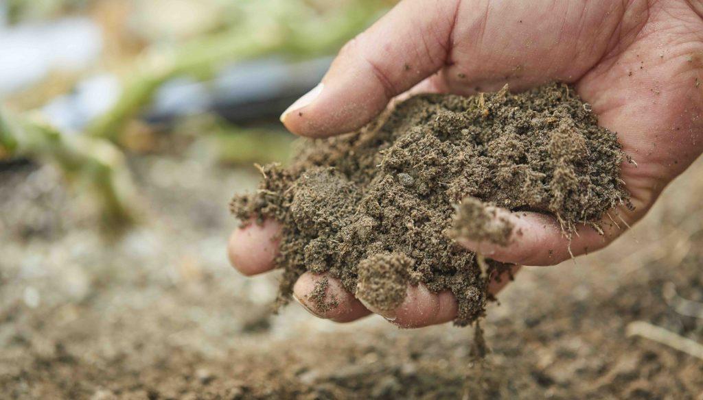 有機農業 organic